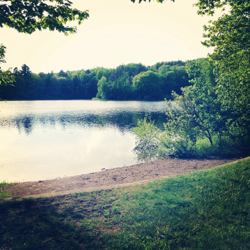 Birch-Grove