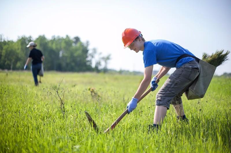 northland_tree_planting